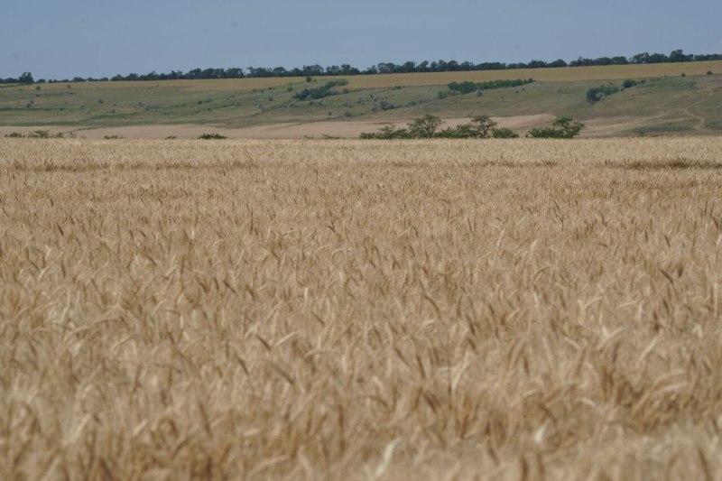 Аграриям Одесчины рассказали, как не стать жертвой рейдерских захватов земли и урожая