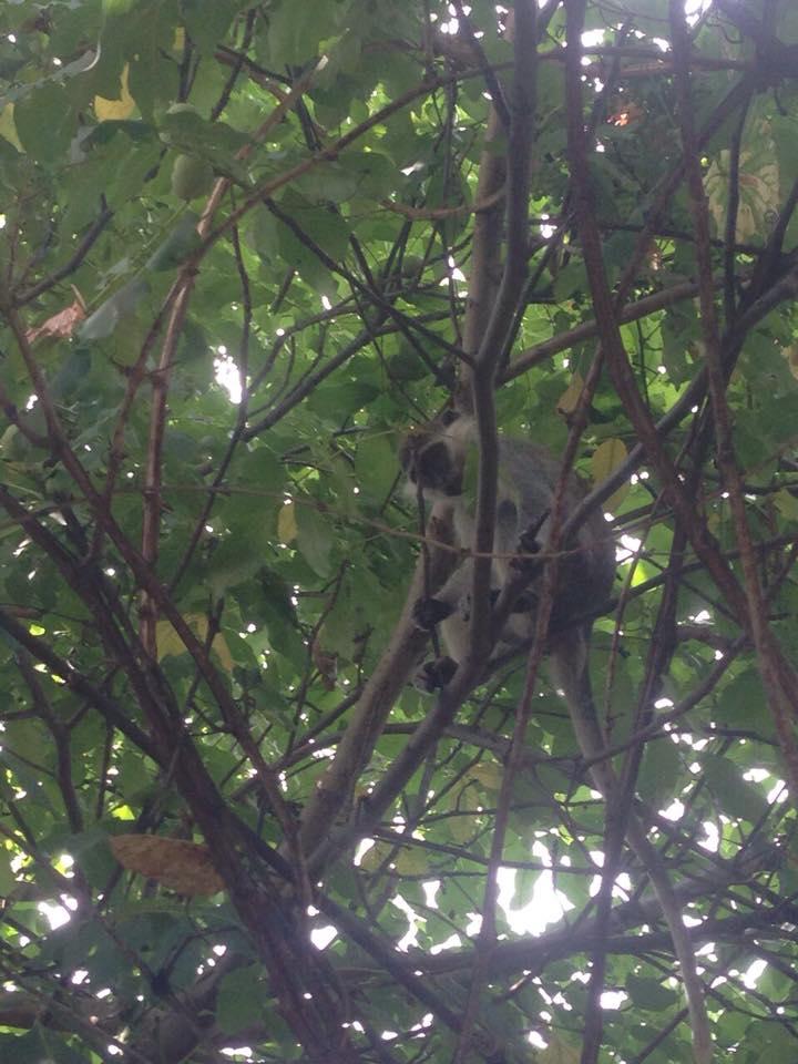 В Одесской области стая обезьян сбежала из зоопарка и захватила дачный поселок (ФОТО)