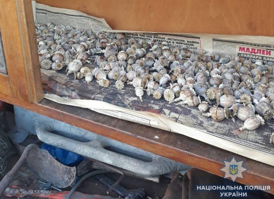 У жительницы Белгород-Днестровского обнаружили на огороде 200 кустов конопли в человеческий рост