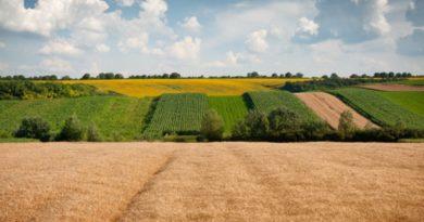 Рынок земли в Украине: все, что нужно знать об историческом решении нардепов