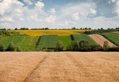 Кабмин упрощает регистрацию земельных участков