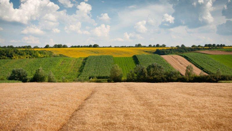 Прикарпатські землевласники сплатили майже 4 мільйони гривень податку