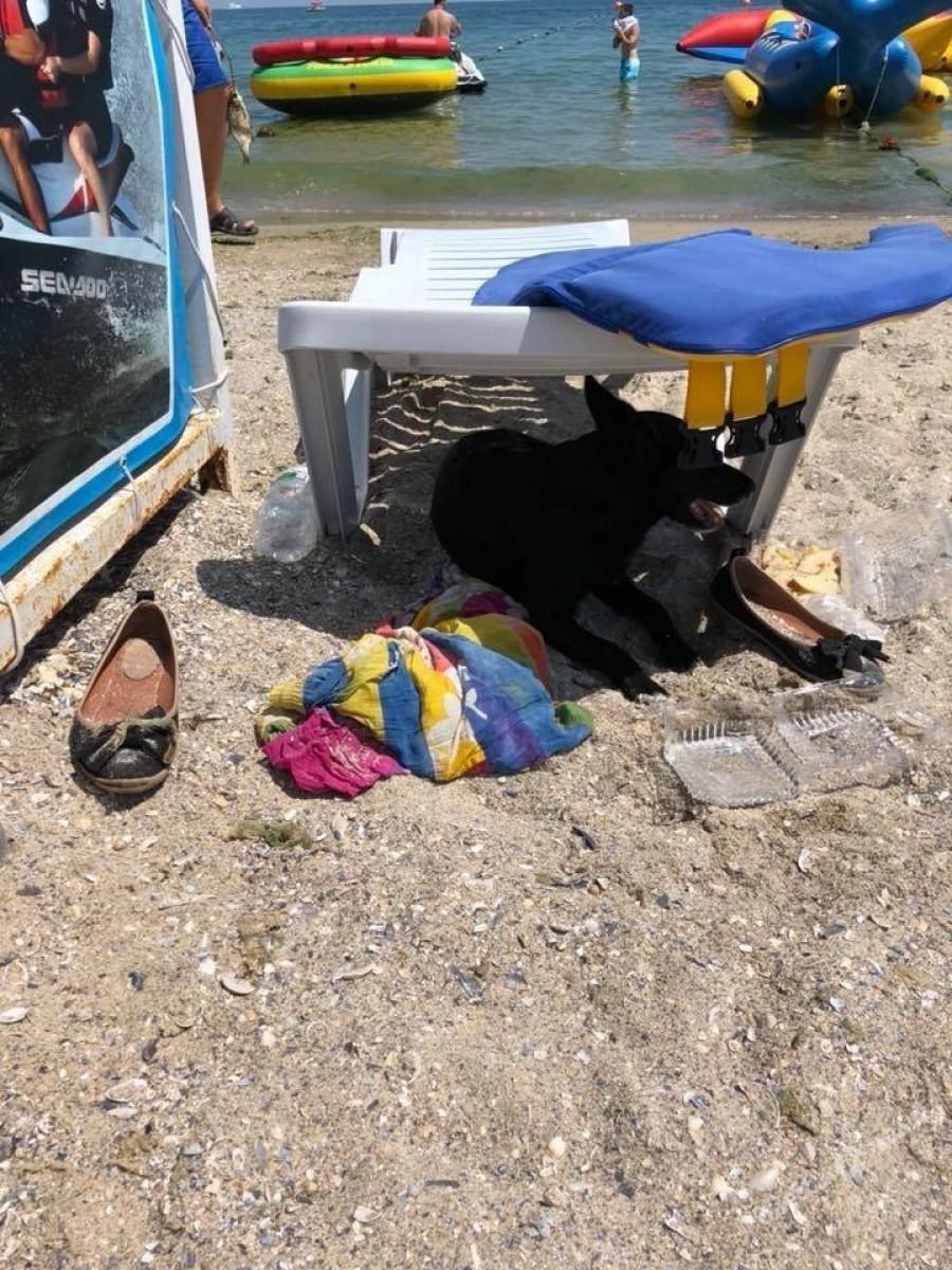 На одесском пляже женщина зашла в море и не вернулась. Собака верно ждала ее до последнего