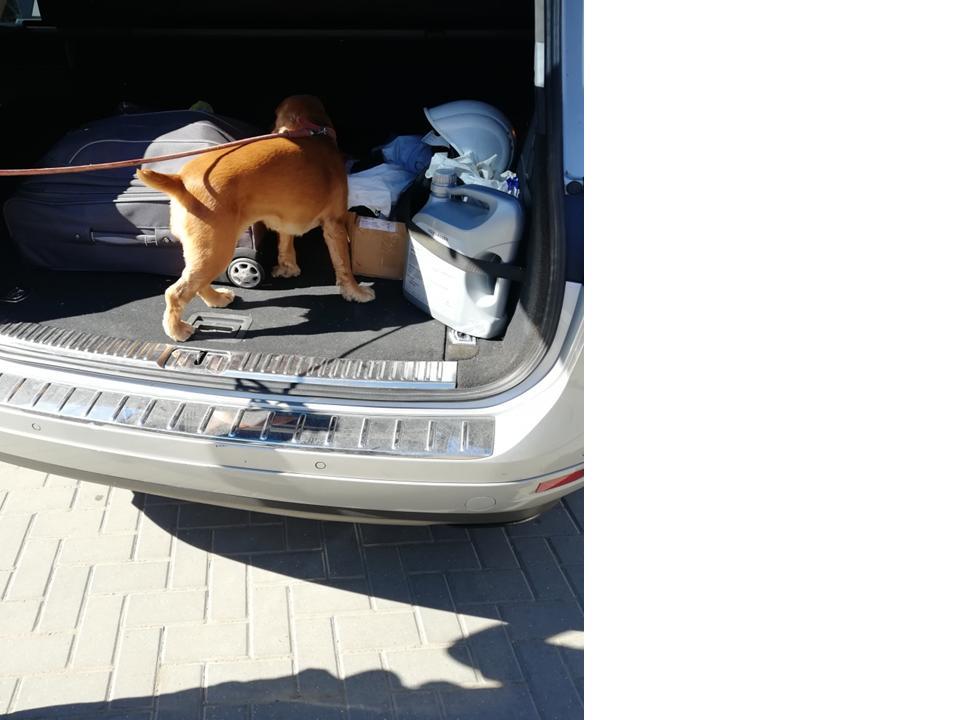 """Больше, чем друг человека: служебные собаки Белгород-Днестровского погранотряда берут контрабанду """"на нюх"""""""
