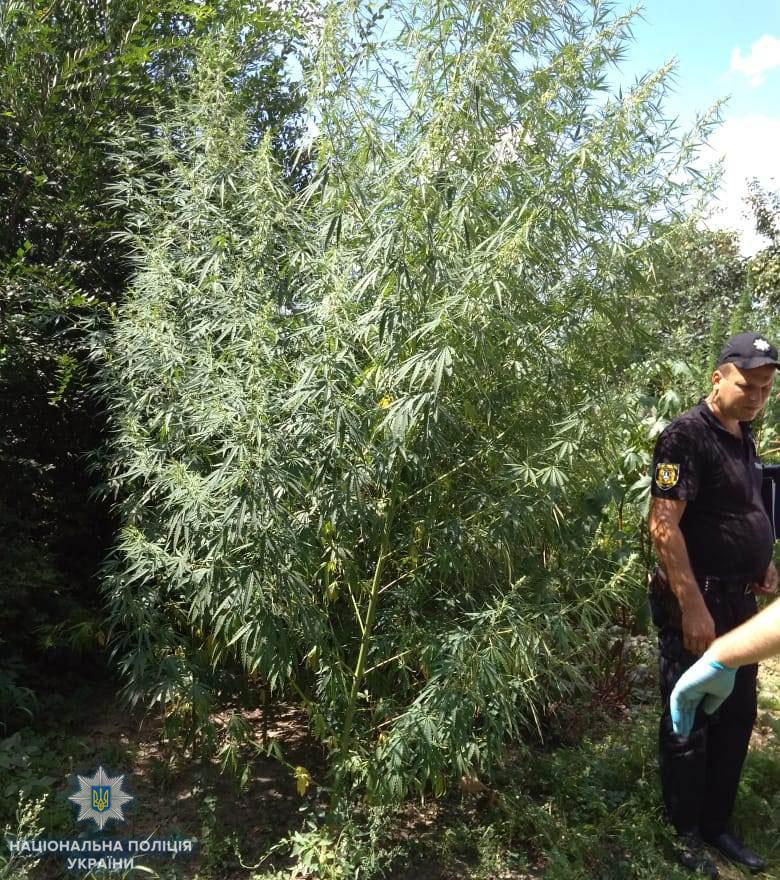 В Арцизском районе любитель конопли держал на всякий случай при себе ружье