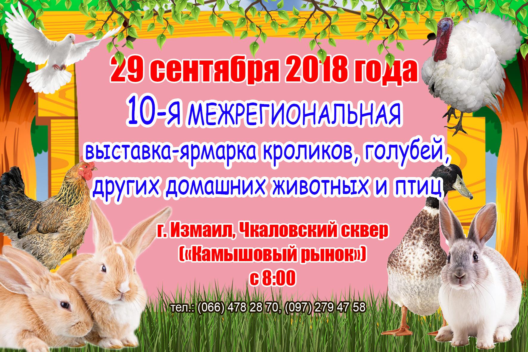 В Измаиле пройдет юбилейная выставка-ярмарка кроликов, голубей и домашних животных