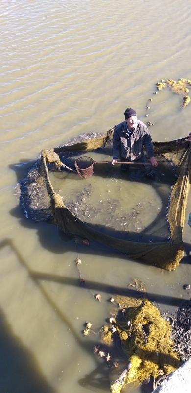 В Одесской области зарыбляют водоемы: в озера Ялпуг и Кугурлуй выпущено 25 тонн рыбы ценных пород
