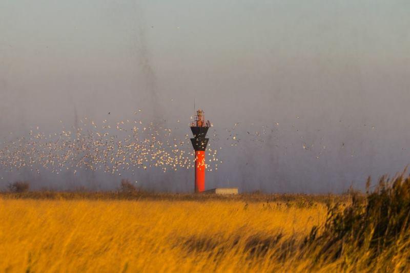 Удивительное природное явление в НПП «Тузловские лиманы» - «смерч» из комаров-звонцов