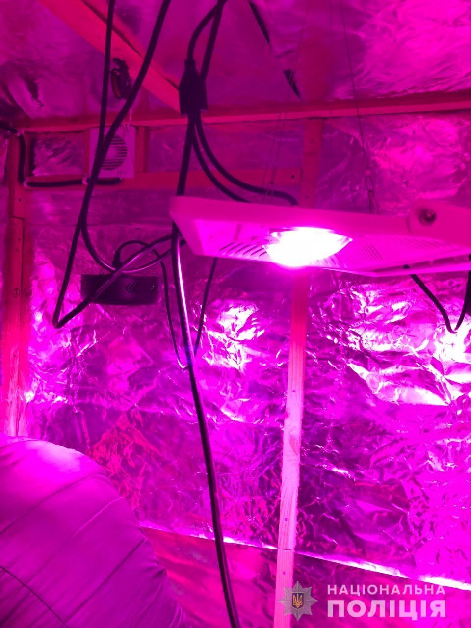 В Болграде изъяли более 40 кило марихуаны - аграрий растил коноплю в настоящей нарколаборатории
