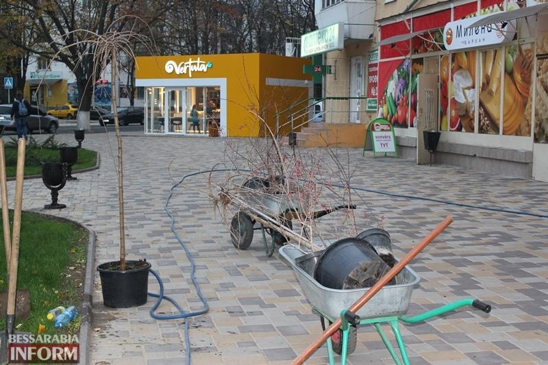 В Измаиле стартовала осенняя высадка деревьев - планируют посадить больше тысячи саженцев