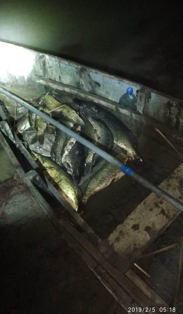 На Дунае пограничники поймали браконьеров с полной лодкой щуки - помог тепловизор
