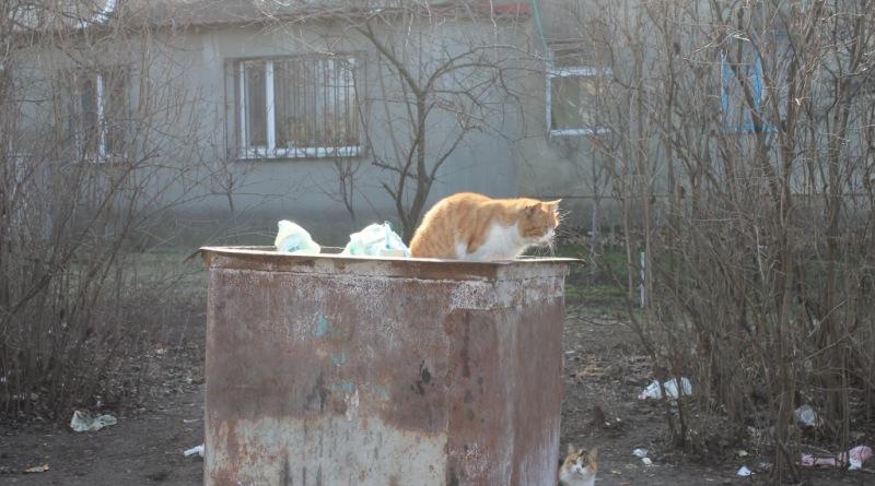 """В Татарбунарах ищут пути решения  """"мусорной"""" проблемы"""