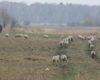 На всё ради брынзы: в Ренийском районе чабанов подозревают в поджоге сосновых рощ и зарослей камыша