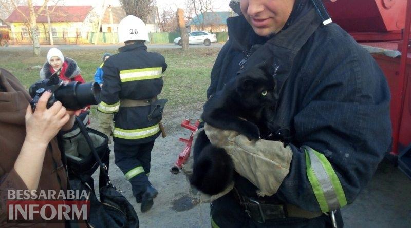 В Измаиле спасли кота,который двое суток просидел на верхушке огромного тополя