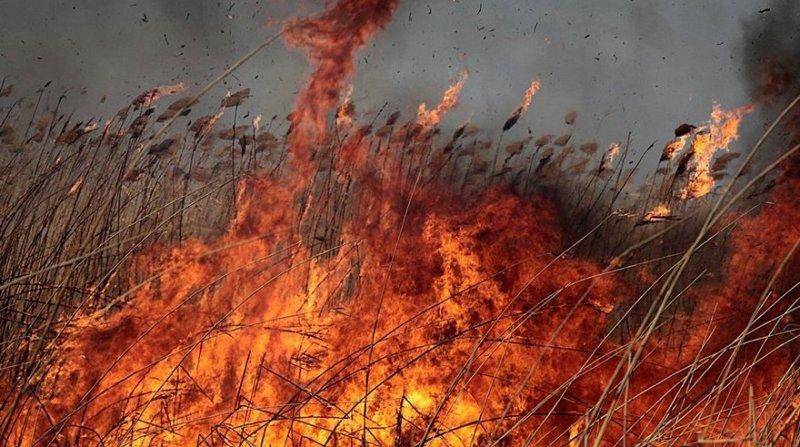 Картинки по запросу пожар под Одессой камыш