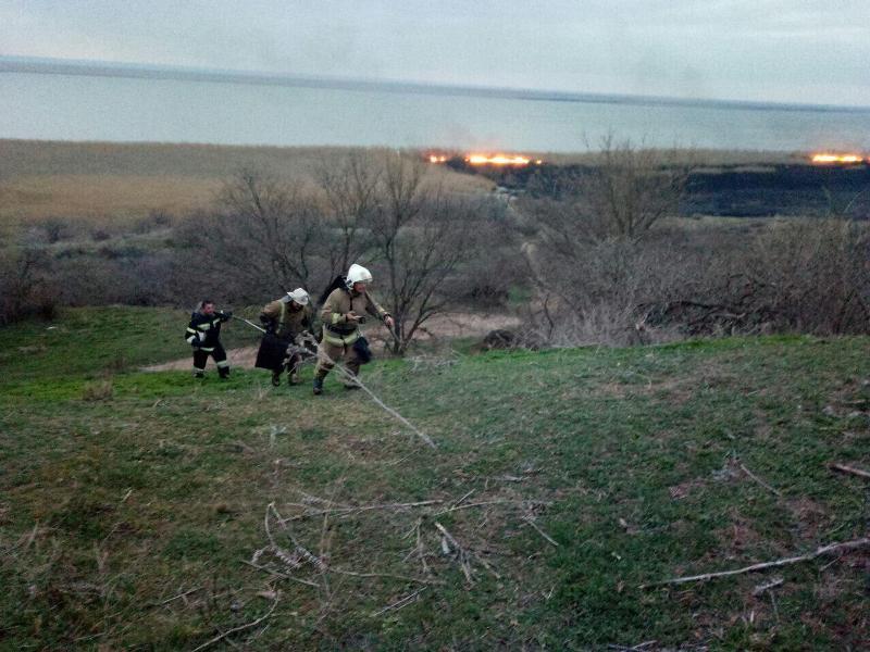 Во время ликвидации пожара в экосистеме Нижнеднестровского природного парка пожарные спасли собаку