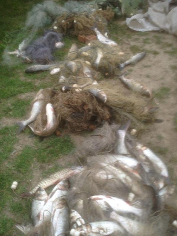Возле Килии был задержан браконьер с моно сетями и 45 килограммами незаконного улова