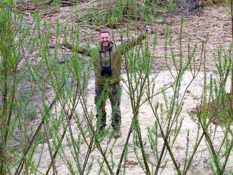 Ажурные экоконструкции: берег Днестровского лимана в районе Шабо укрепит и украсит посадка вербы