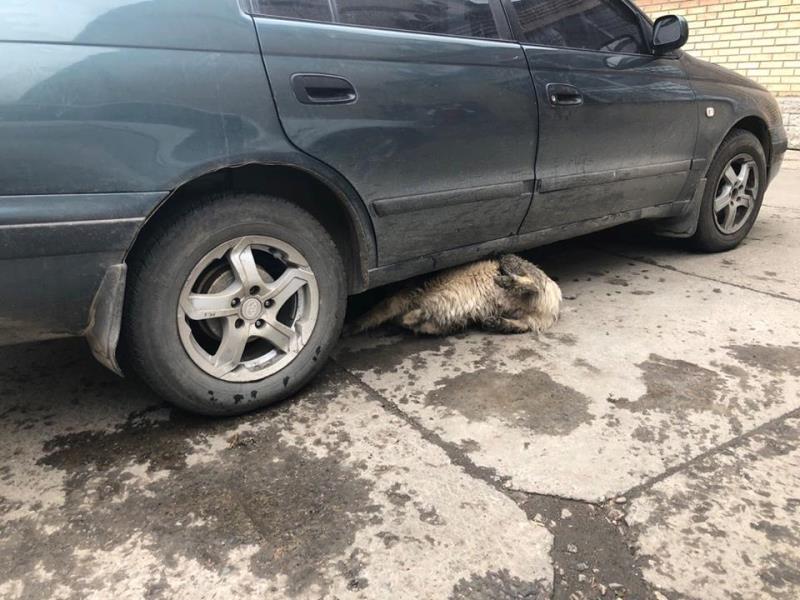 Массовая травля собак в Измаиле: животные умирают в страшных муках