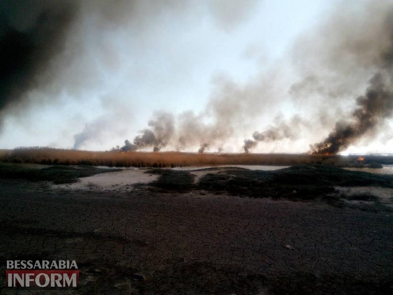 В Мологе горит камыш и сухая трава, спасатели пытаются потушить пожар - под угрозой жилые дома