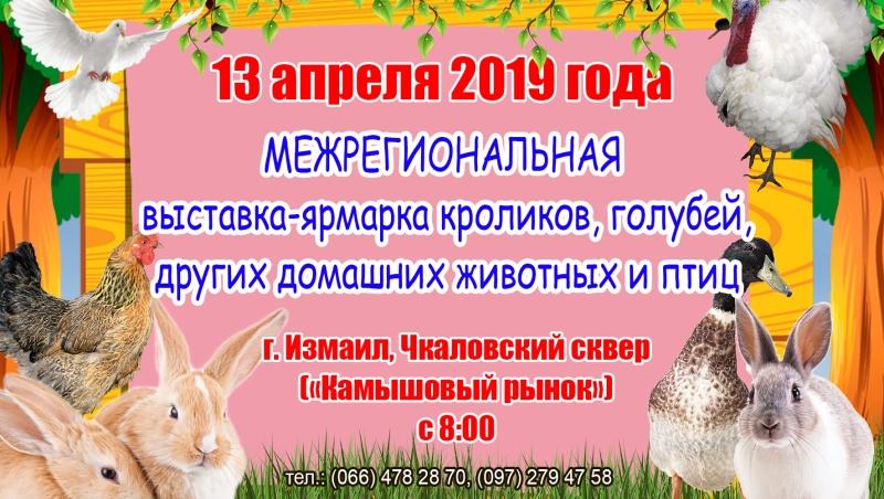 Смотр пернатых и ушастых: на выходных измаильчан приглашают на большую ярмарку домашних животных и птиц