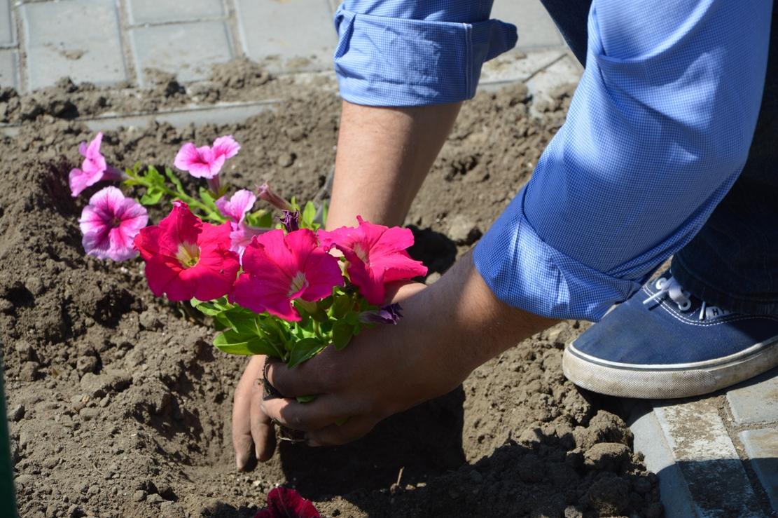 В центре Килии будут высажены около трех тысяч петуний и бегоний