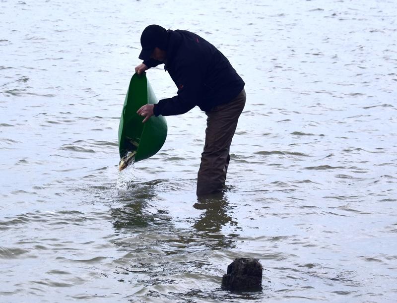 В Дунай в районе Орловки выпустили больше тысячи мальков исчезающего осетра