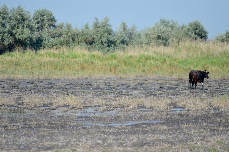 Из-за бездеятельности властей и полиции в Татарбунарском р-не распахивают остатки прибрежных полос, лишая птиц мест гнездования