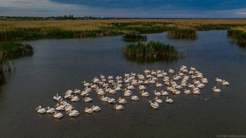 Завораживающая красота украинского Придунавья: озеро Кугурлуй и стая розовых пеликанов (фото)