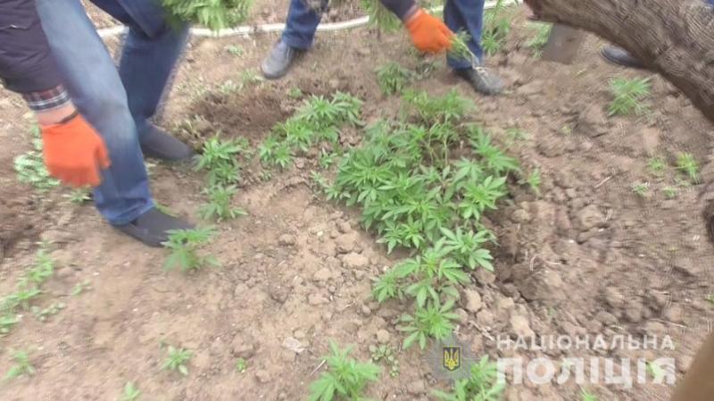 В Измаиле двое местных жителей подозреваются в выращивании и хранении наркотиков