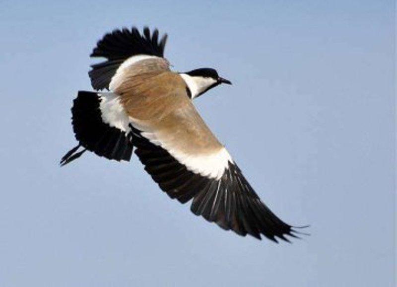 Не видели почти 200 лет: в Одесской области заметили редкую птичку