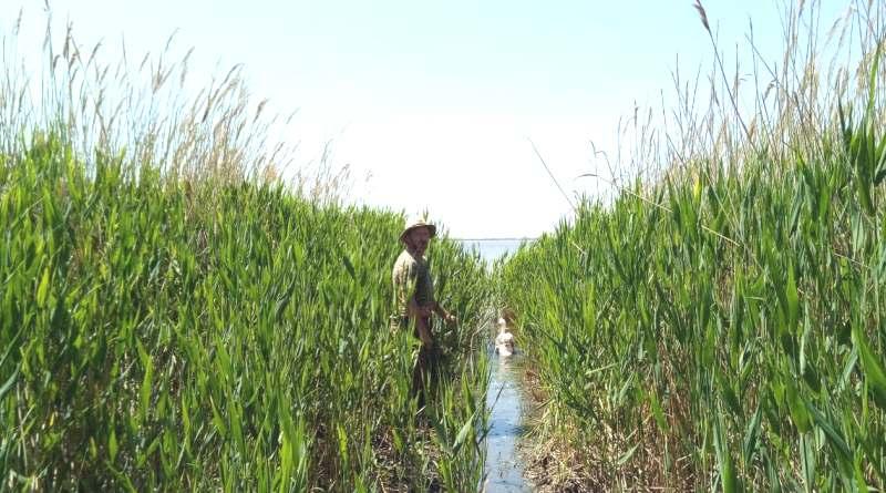 """Сотрудники нацпарка """"Тузловские лиманы"""" вернули в дикую природу лебедя, который несколько дней восстанавливал силы под наблюдением экологов"""