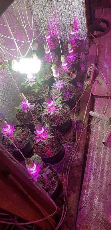 """""""Зимний"""" сад из конопли: в Одессе прокуратура задержала мужчину, который дома выращивал наркотики"""