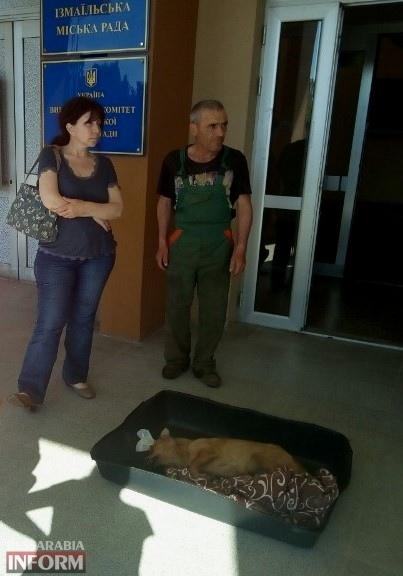 В Измаиле зоозащитники принесли на порог мэрии труп собаки, пытаясь привлечь внимание властей к травле бездомных животных