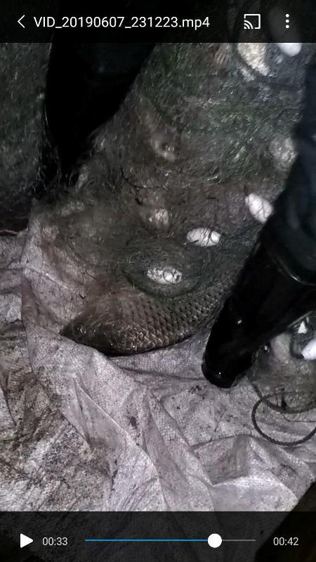 На озере Сасык в Татарбунарском районе задержали браконьера с 16-ти килограммовым уловом