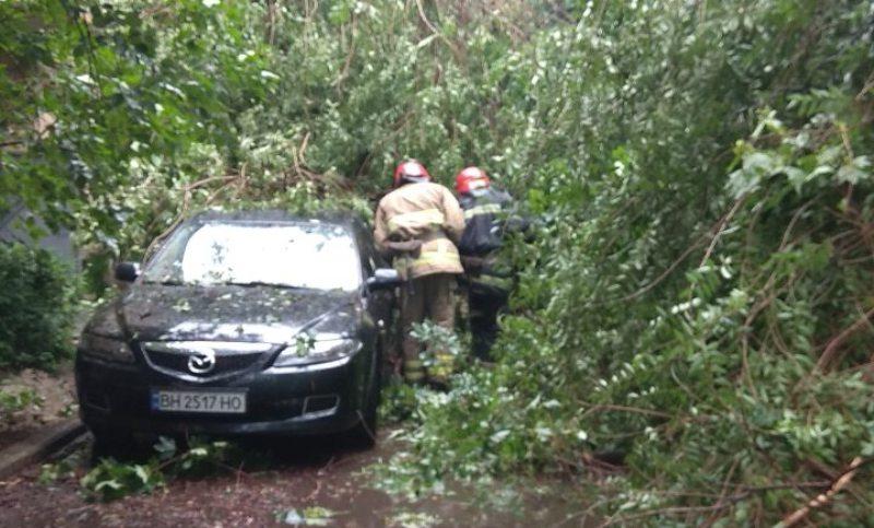 В Измаиле в результате непогоды дерево рухнуло на автомобиль