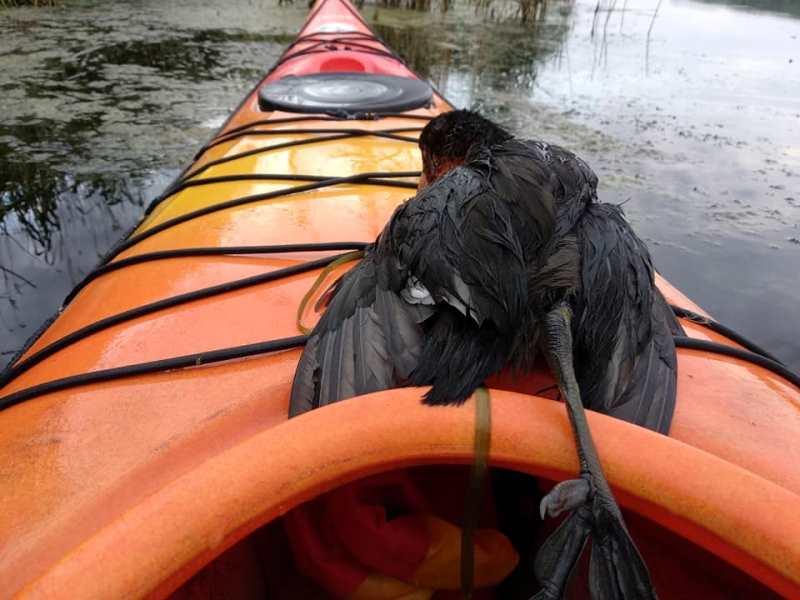 Человек и природа: измаильчанин спас птенца, который чуть не стал жертвой беспечности местных рыбаков