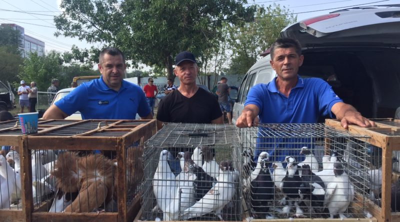 Выставка-ярмарка голубей, Татарбунары, 25.08.2019г.