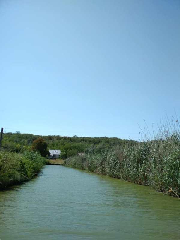С каждым днём ситуация только ухудшается: на озере Катлабух в Измаильском районе зреет экологическая катастрофа
