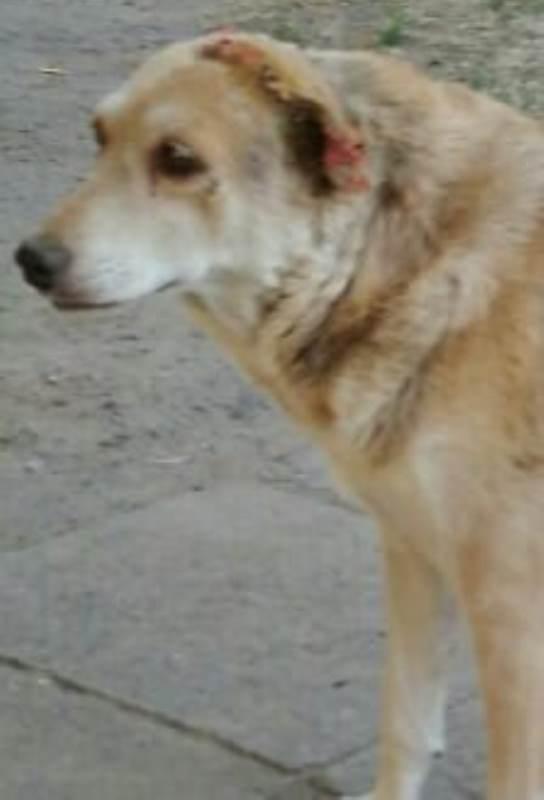 В Измаиле мужчина на глазах у детей отрезал ухо бродячей собаке и пытался снять с неё скальп