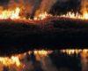 Из-за халатности туриста сгорело около гектара заповедной территории в Татарбунарском районе