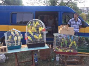 Ярмарка голубей и декоративных птиц собрала в Татарбунарах голубеводов из разных городов Бессарабии