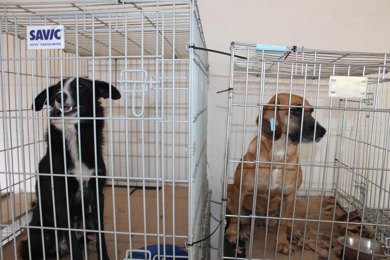 """Гуманный способ контроля популяции: в Аккермане """"4 лапы Украина"""" проводит стерилизацию бездомных животных"""