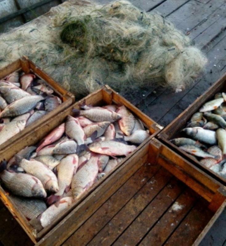 На озере Ялпуг в Ренийском районе браконьер ловил рыбу 13 сетками и нанес ущерб на более чем 12 тысяч гривен