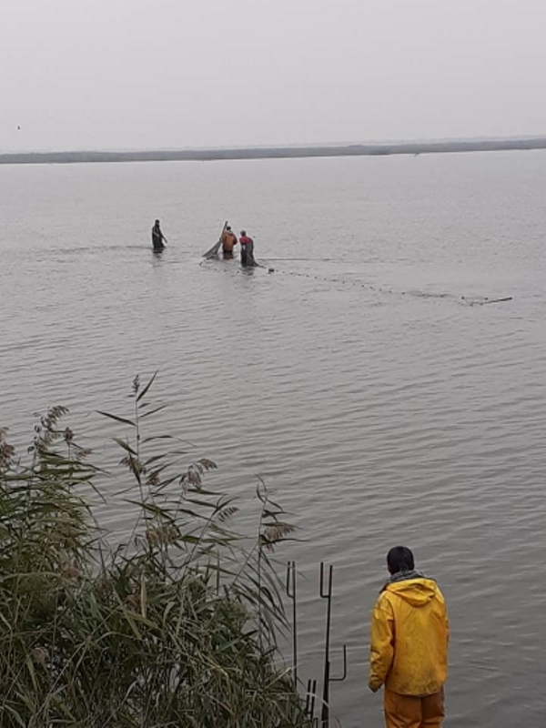 В Белгород-Днестровском районе начали зарыбление лимана - выпущено 3,3 тонны ценных видов рыб