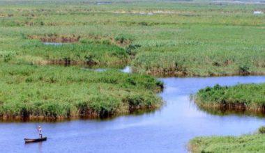 Умирающий украинский Дунай: к чему приводит обмеление дельты и важность решения этой проблемы