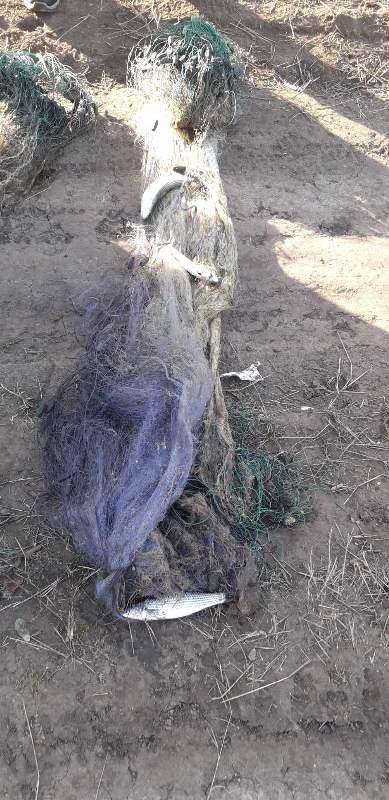 На озере Бурнас в Татарбунарском районе браконьер ловил кефаль сетками и нанес ущерб государству на почти 19 тысяч гривен