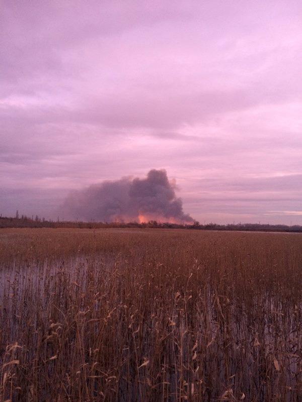 На Одесчине в природном заповеднике произошел крупный пожар - выгорело 800 га территории