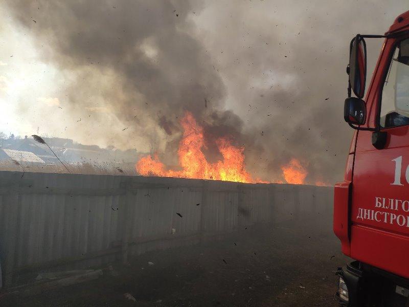 В Белгороде-Днестровском полыхали заросли камыша, общей площадью 3 гектара: огонь подступал к жилым домам