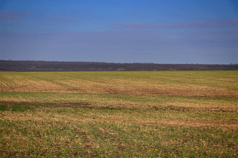 Без слёз не глянешь: из-за засухи в Бессарабии погибает урожай озимых зерновых и рапса - шокирующее видео с полей